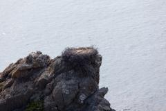 Storchennest auf dem schroffen Felsen
